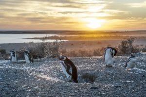 google penguin release